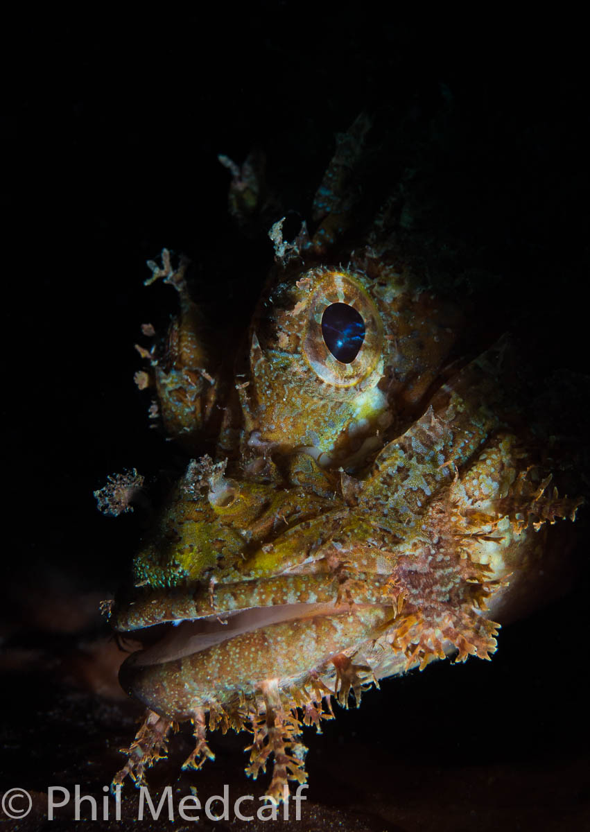 This image of a scorpion fish was taken using one strobe with the cameras shutter speed as high as possible. In this case the camera was a mirrorless one and flash sync speed (the fastest shutter speed at which you can use the flash without getting shadow from the shutter curtain in your shots) was 1/160.