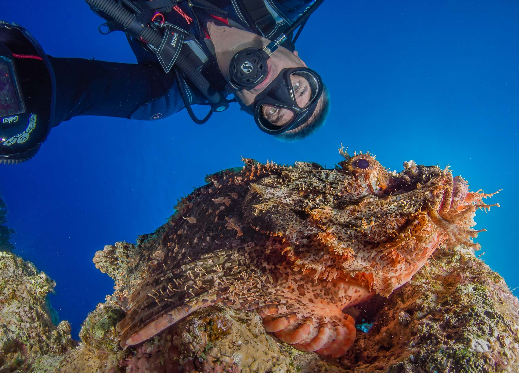 I had spent an entire dive fruitlessly trying to find subjects, and then when I did they weren't in the right position, but just before I had to surface I found this Scorpion Fish and I couldn't for the life of me, get a good original framing, so almost as a throwaway I decided to take a selfie, with my arms stretched and just guessing the framing this was my favourite shot of the whole dive. Funny how the universe throws you an odd shaped bone sometimes !