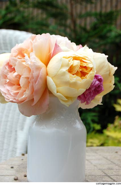 Pink Yellow and Peach Cabbage Roses