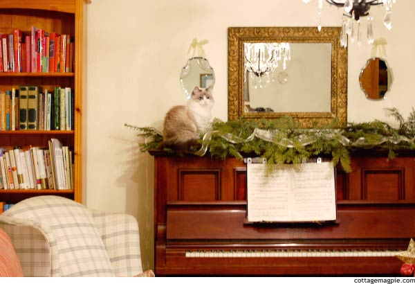 Kitty on Piano in Living Room