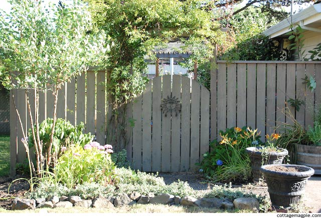 Rock and Euonymous Border by Garden Gate