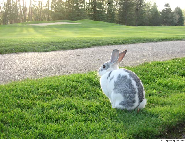 The Actual Easter Bunny via Cottage Magpie