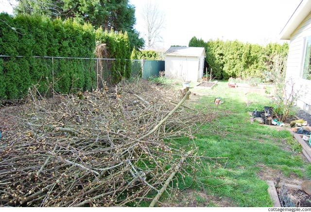 The End of an Era.... The Pear Tree is No More via cottagemagpie.com