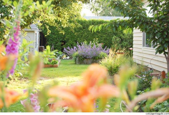 this-years-garden-project-the-shed-garden.jpg