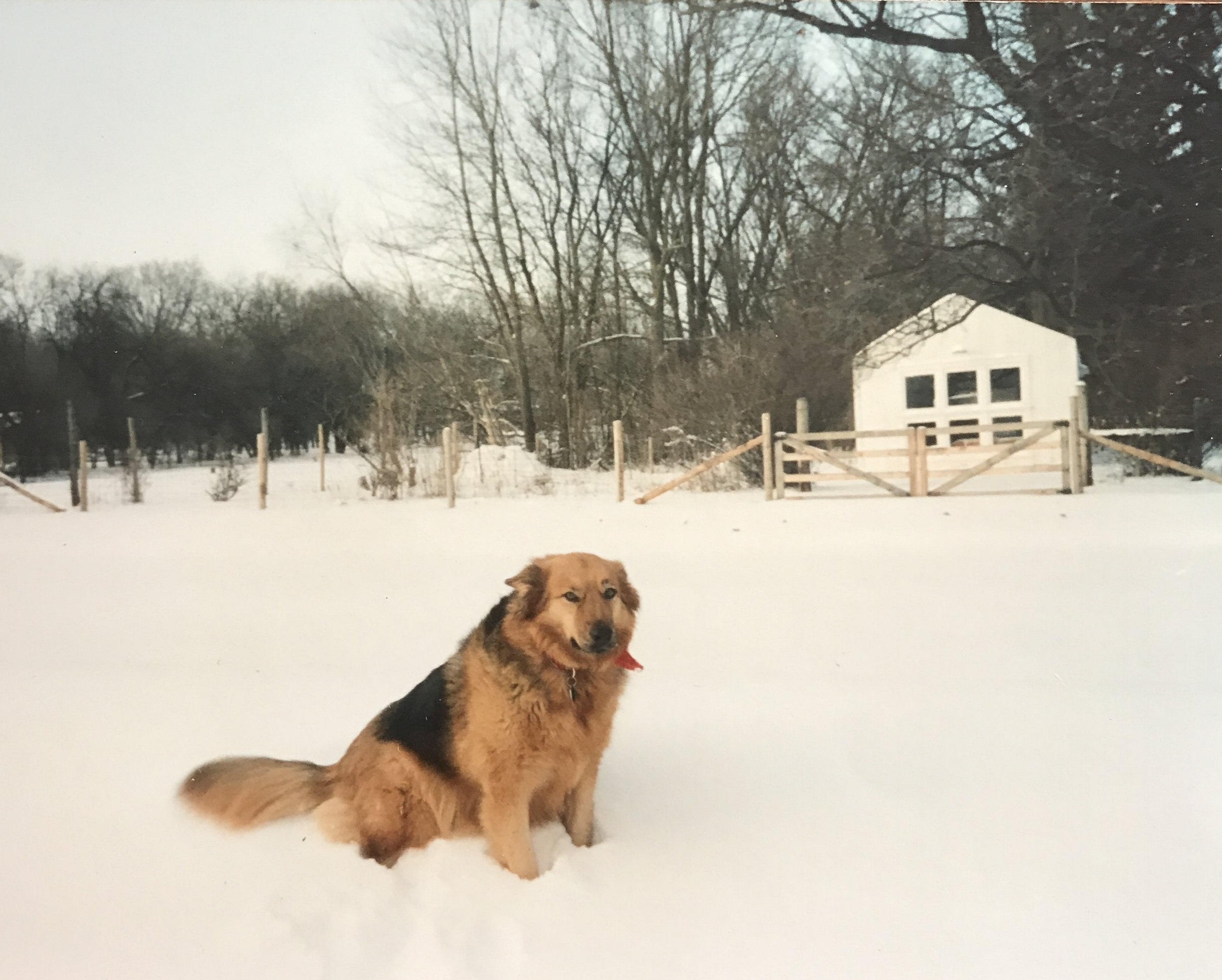 Lady on my grandparents farm. She was a really pretty dog. It was freezing cold that day.