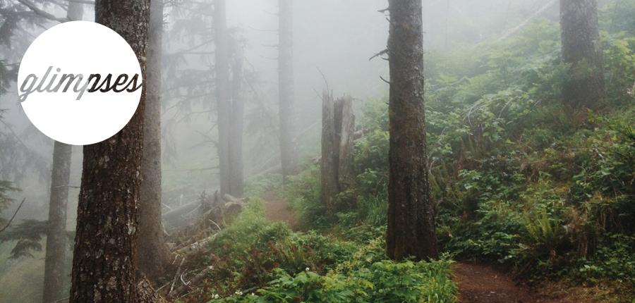 glimpses-treesfog.jpg