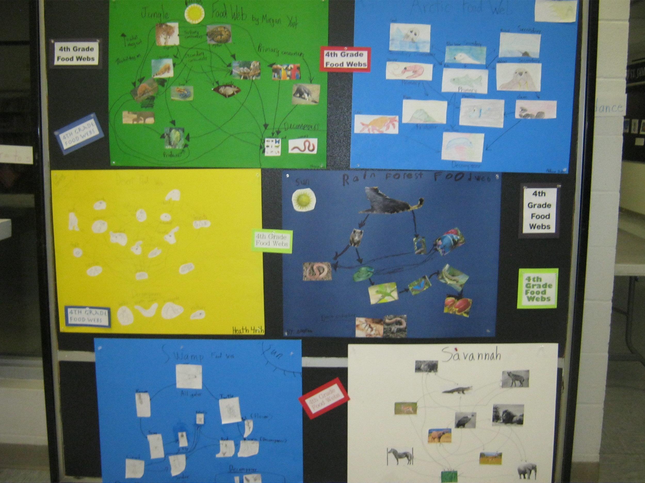 Some 4th Grade Food Webs