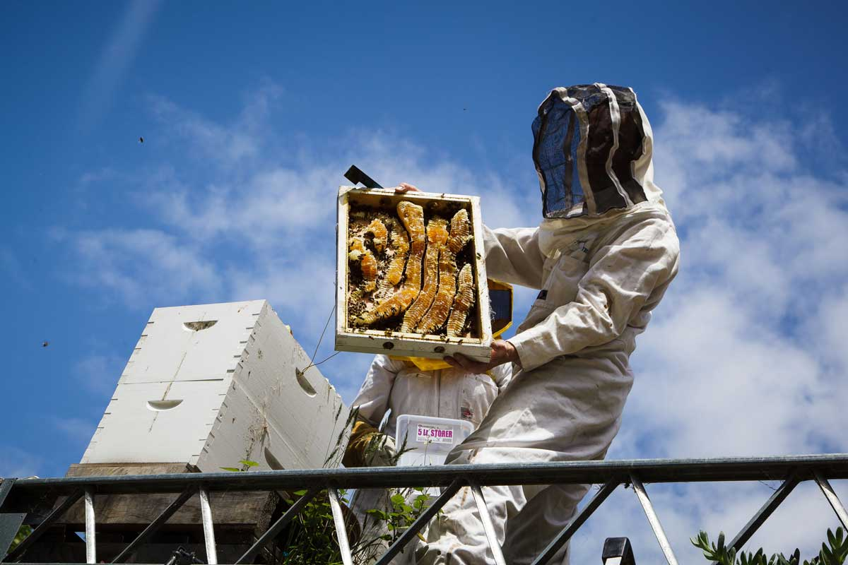 Bees-at-TG-01.jpg
