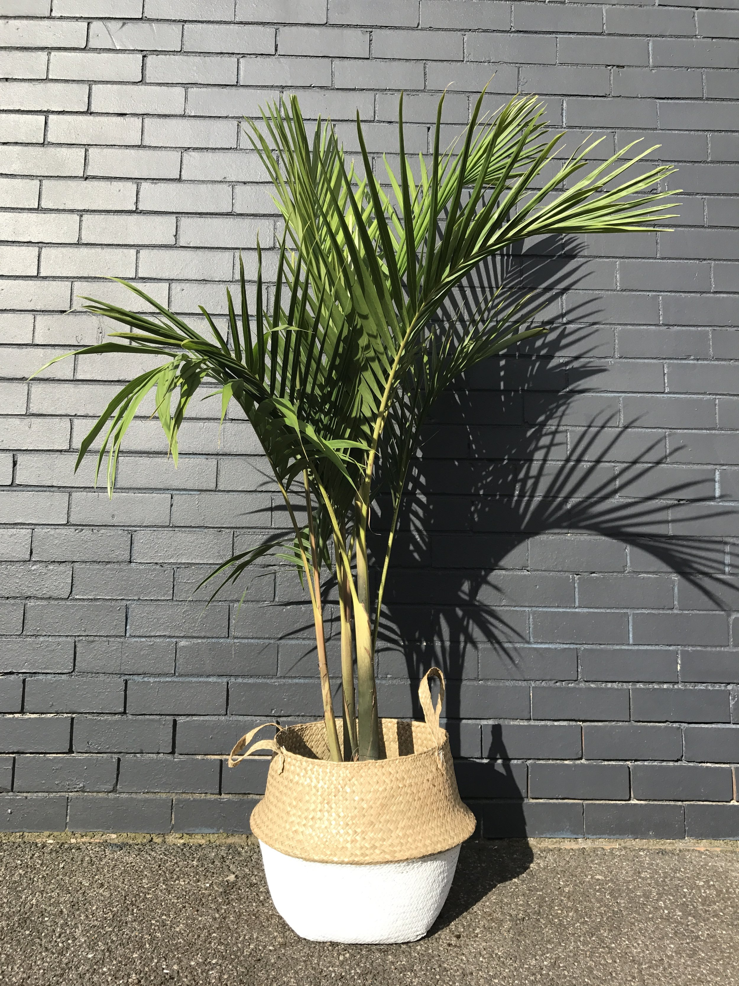 Sea Grass Basket available in custom patterns and colours