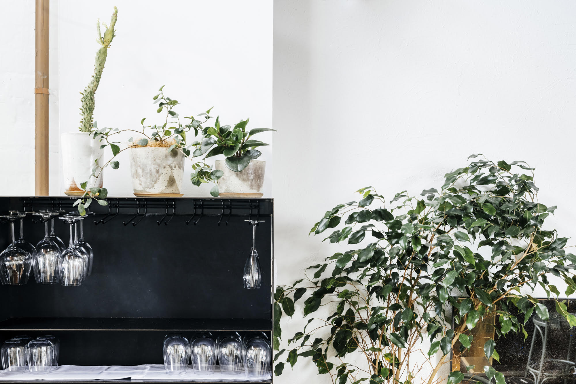 Broadsheet Kitchen Indoor Plant Styling