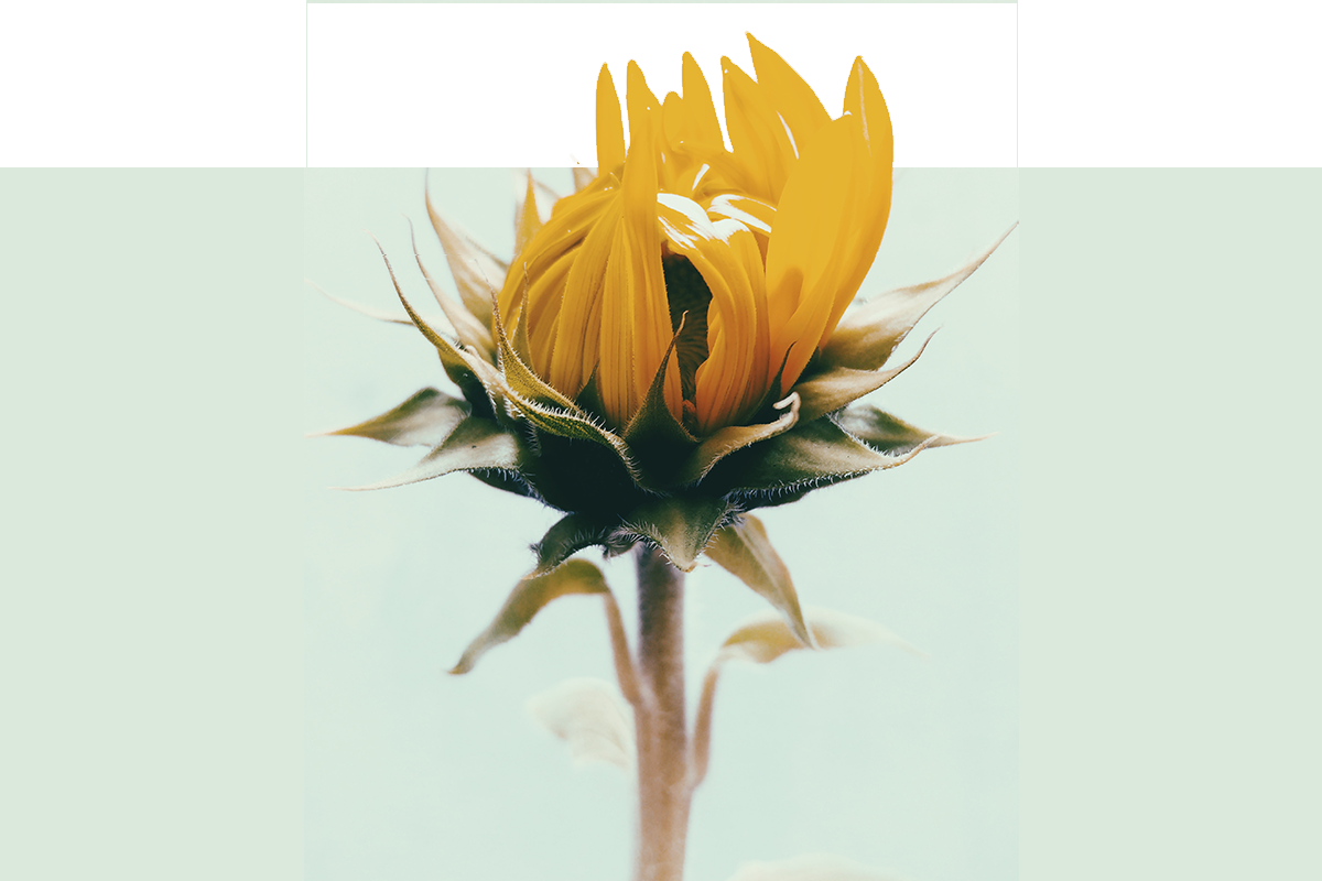 flower-test.png