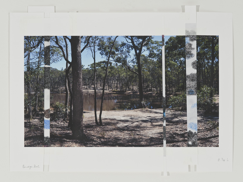 DENISE GREEN  Bendigo Bush,  2015 one photograph and three drawings 45 × 59.5 cm