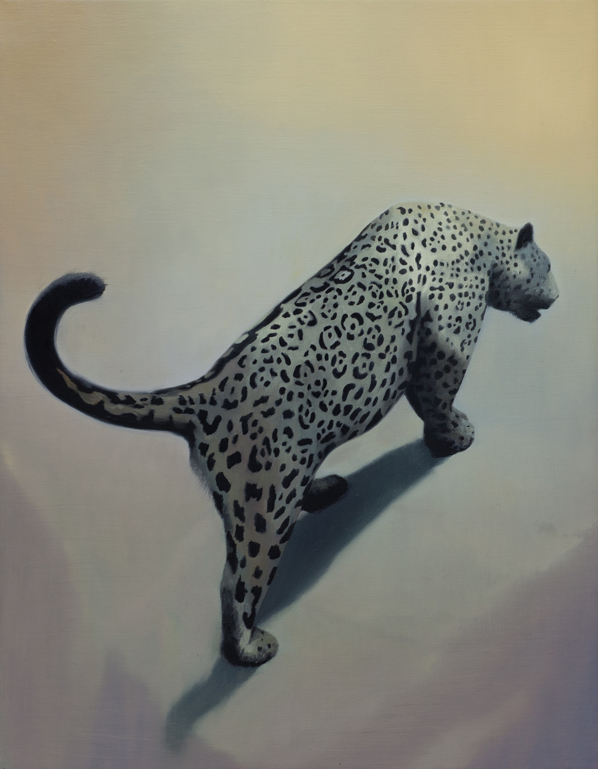 SIMON KENNEDY  Leopard  2011 oil on linen 45 × 35 cm