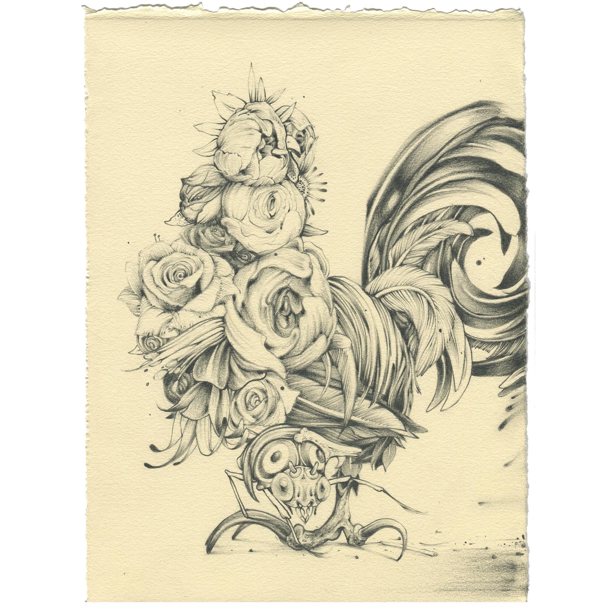 "flower rooster - graphite on bfk - 8""x10"""