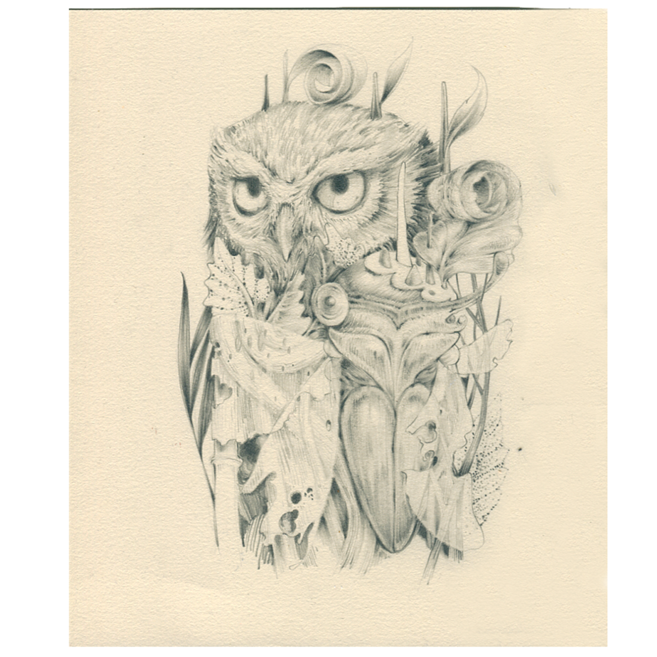 "owl + cicada - graphite on bfk - 8""x10"""