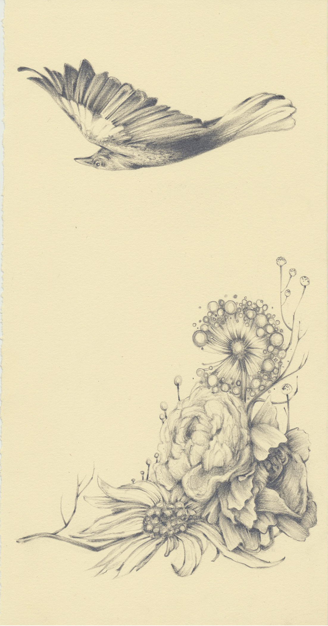 """the crow flies - graphite on paper - 7""""x11"""""""