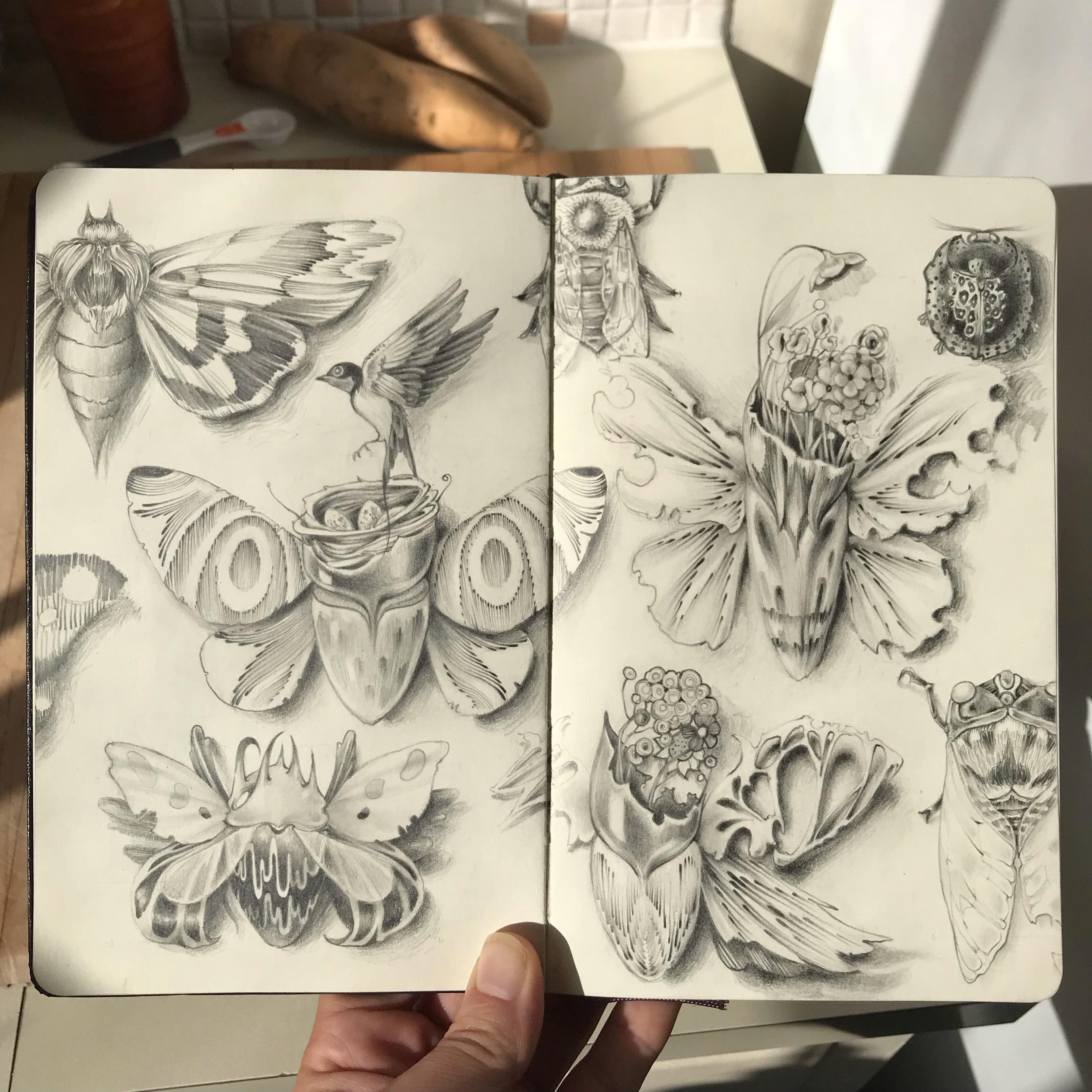 moths + flowers + birds - graphite in moleskine