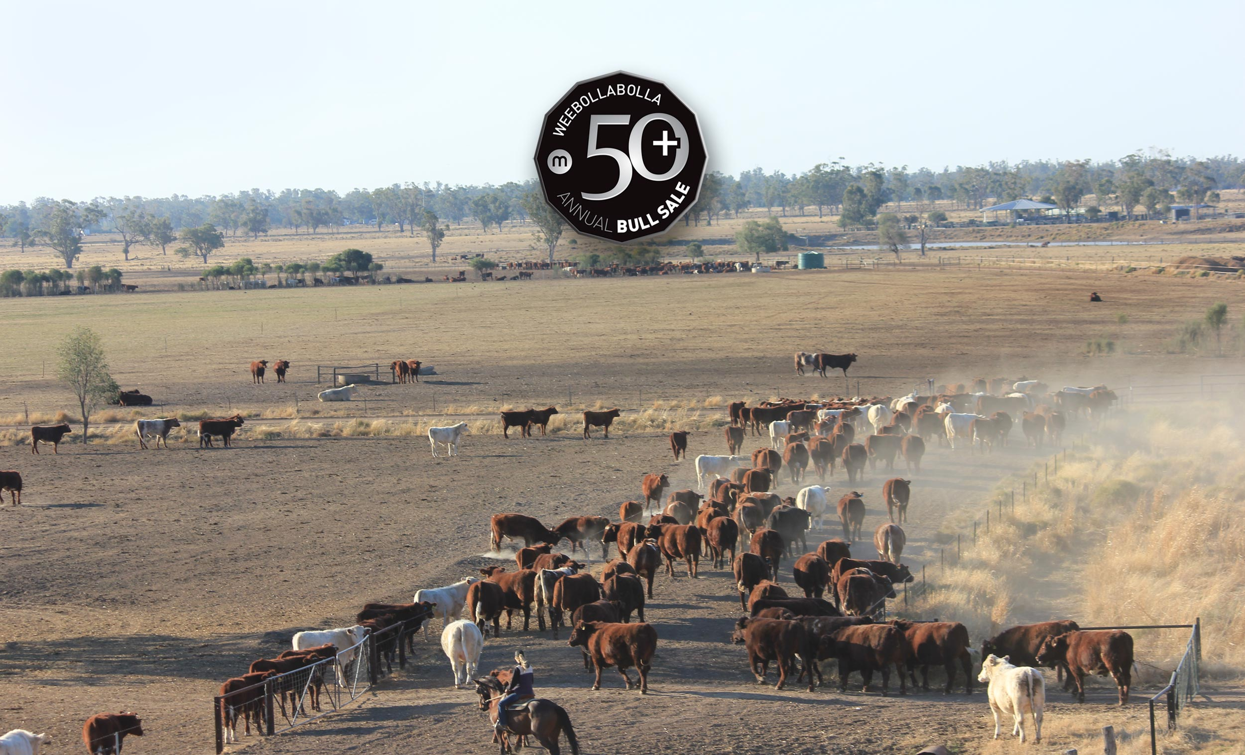 Celebrating 50+ Annual Bull Sales   Munro's of Weebollabolla Since 1873    Learn More