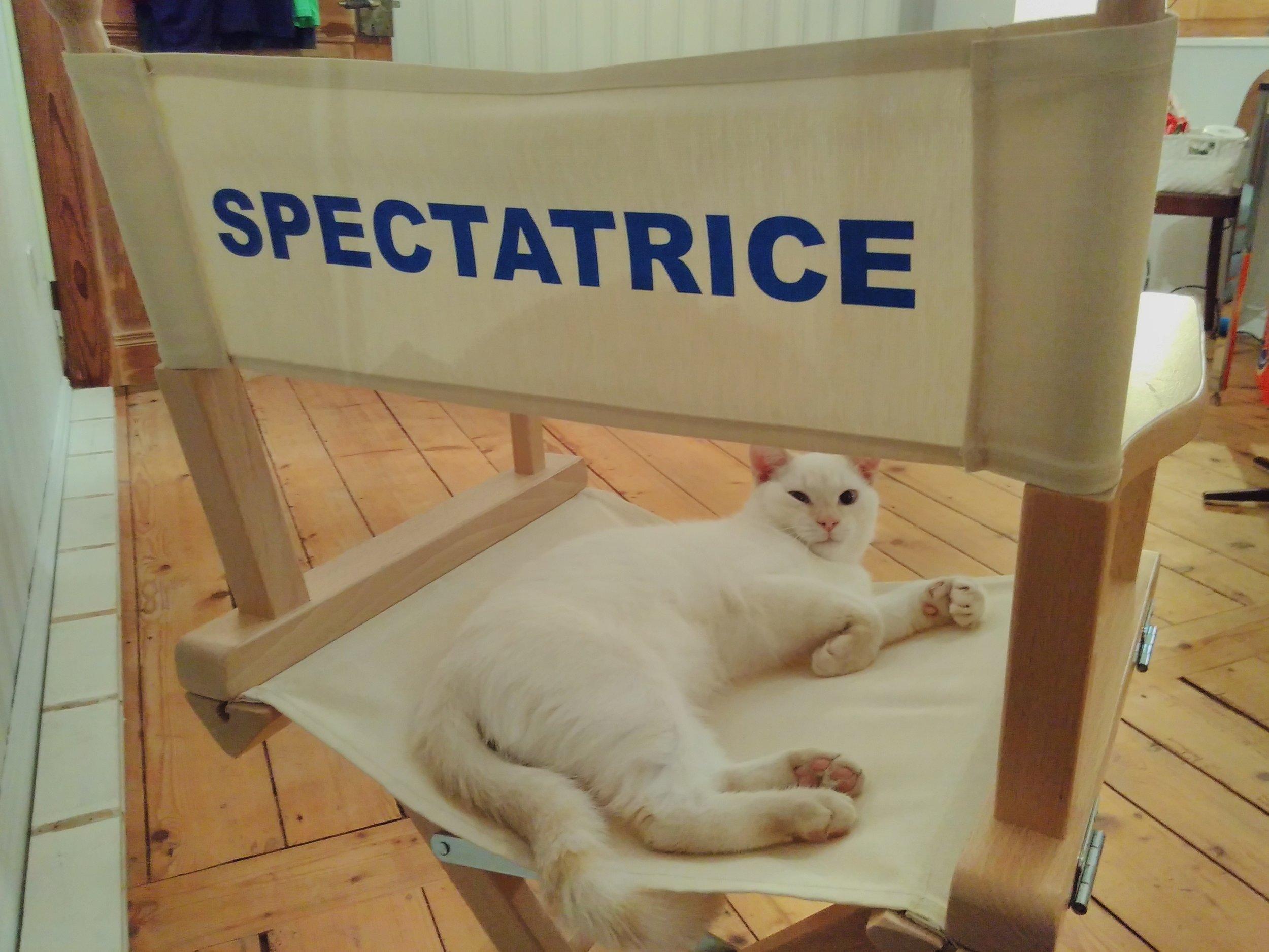 Le chat, Robert Milin dit Mimi, aime la place de spectatrice
