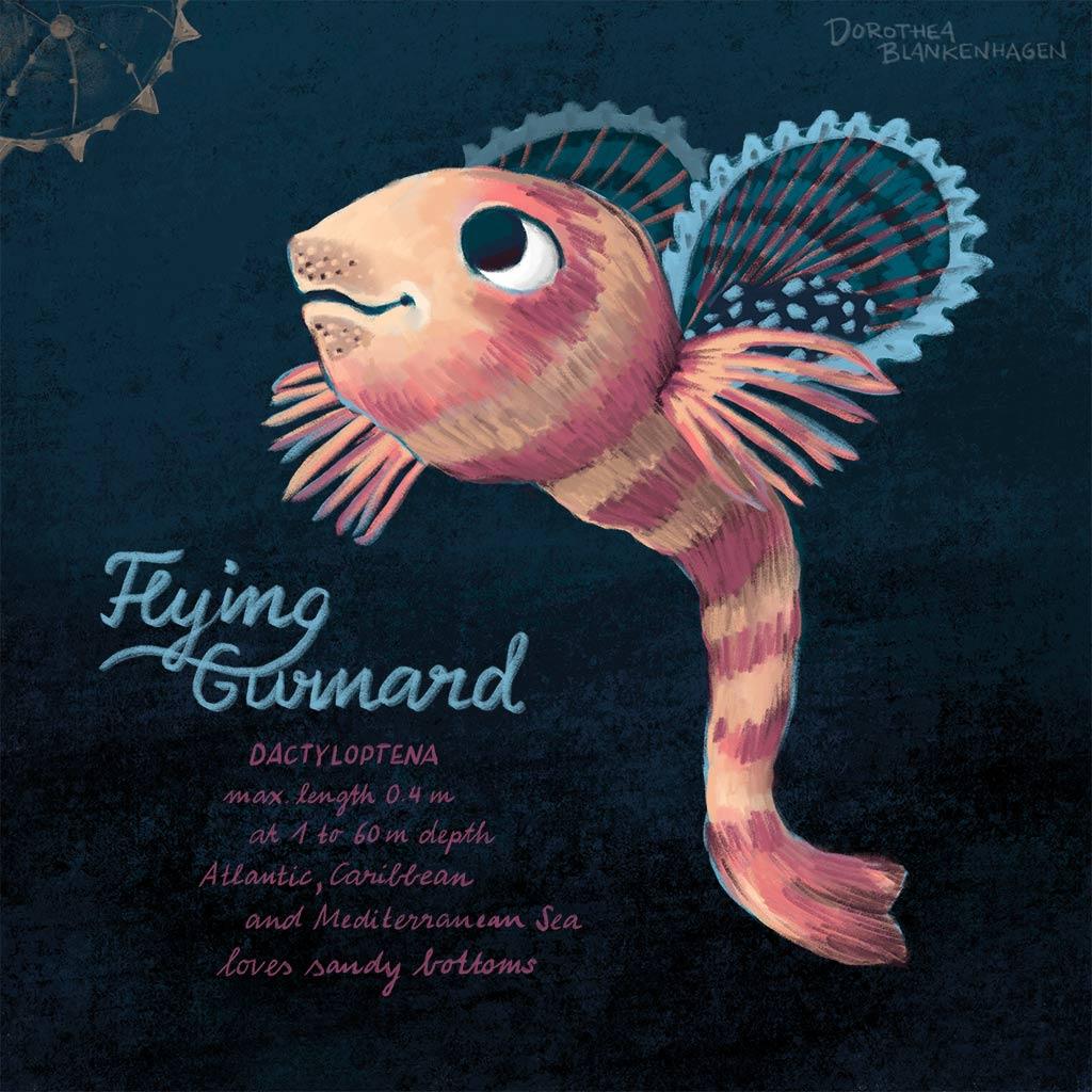 Flying Gurnard/Flughahn