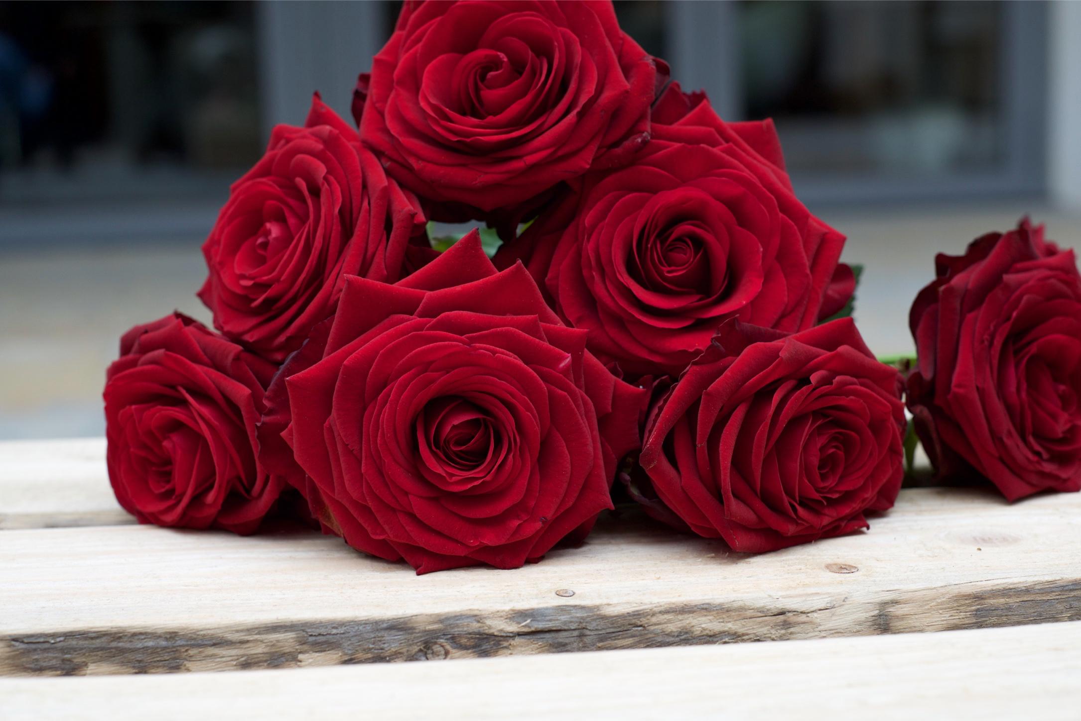Rode rozen op kist - Afscheidsfotografie x STiP Fotografie