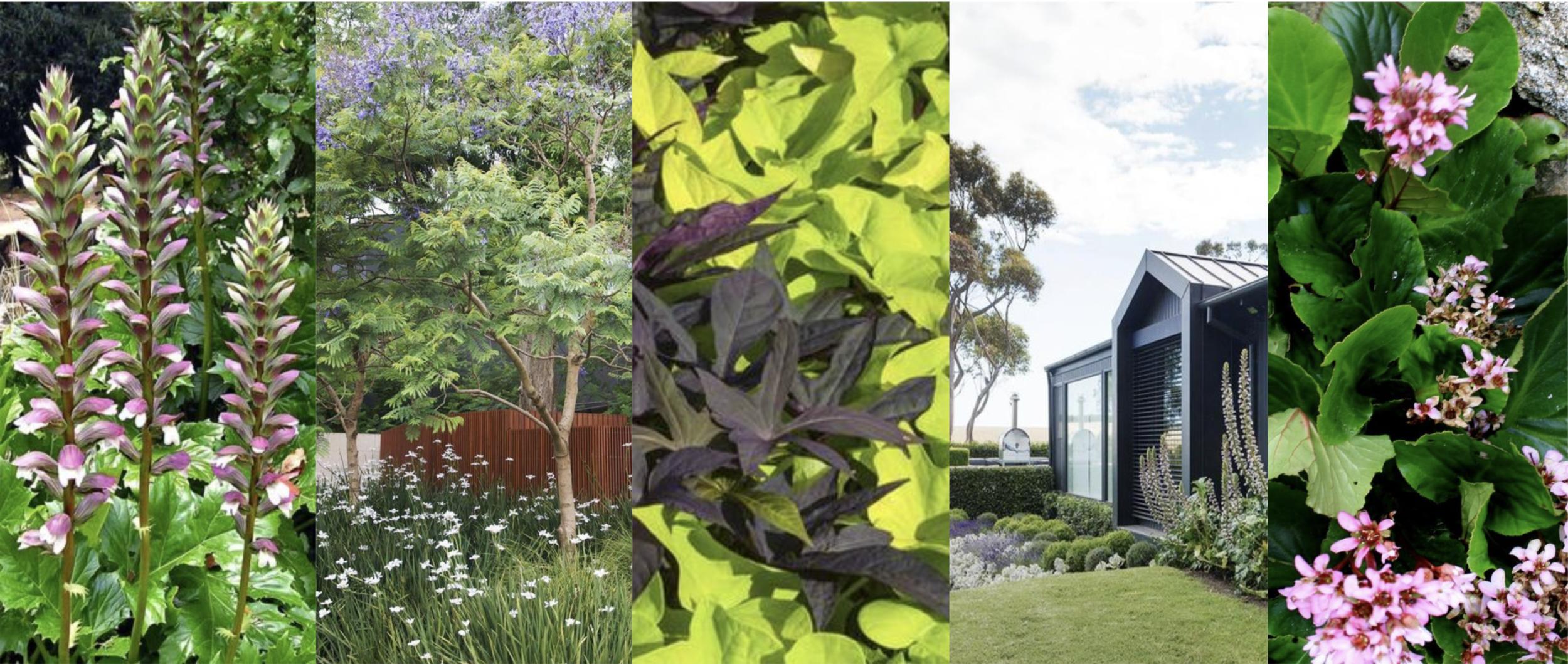 Jardín Ornamental/ Silvestre