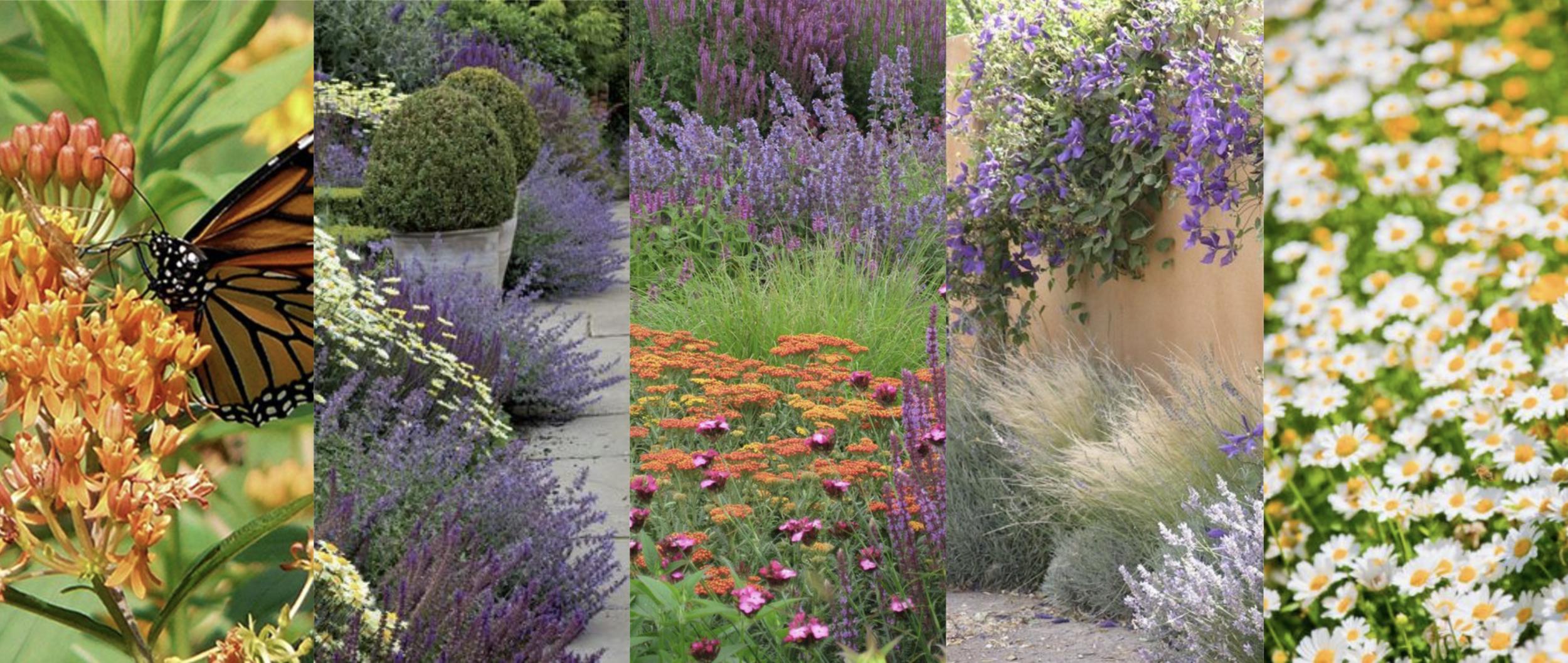 Jardín polinizadores / Flores