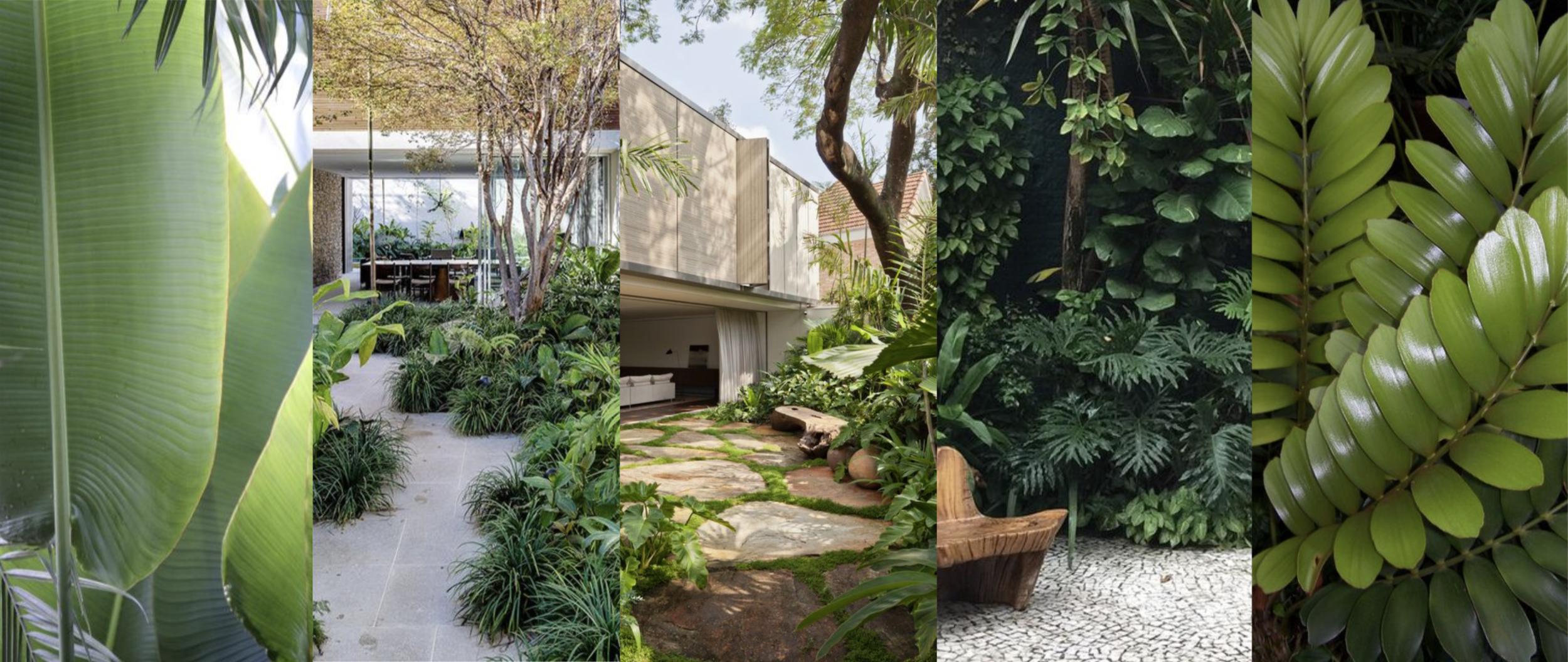 Jardín Tropical / Selvático