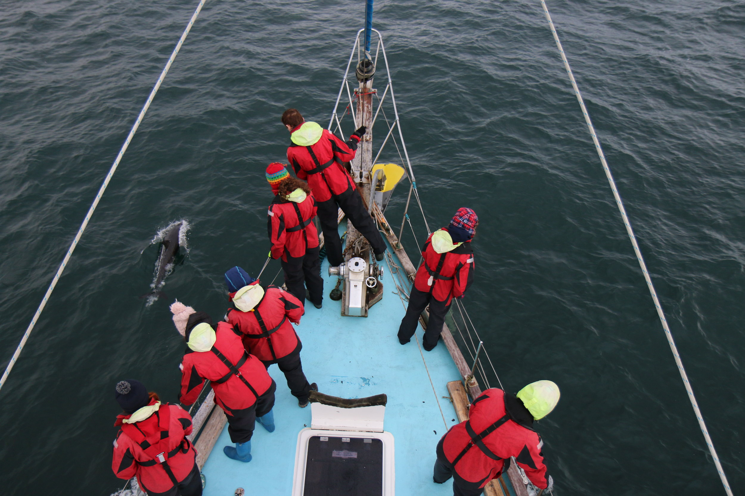 Young Carers on board Silurian with bow riding common dolphins
