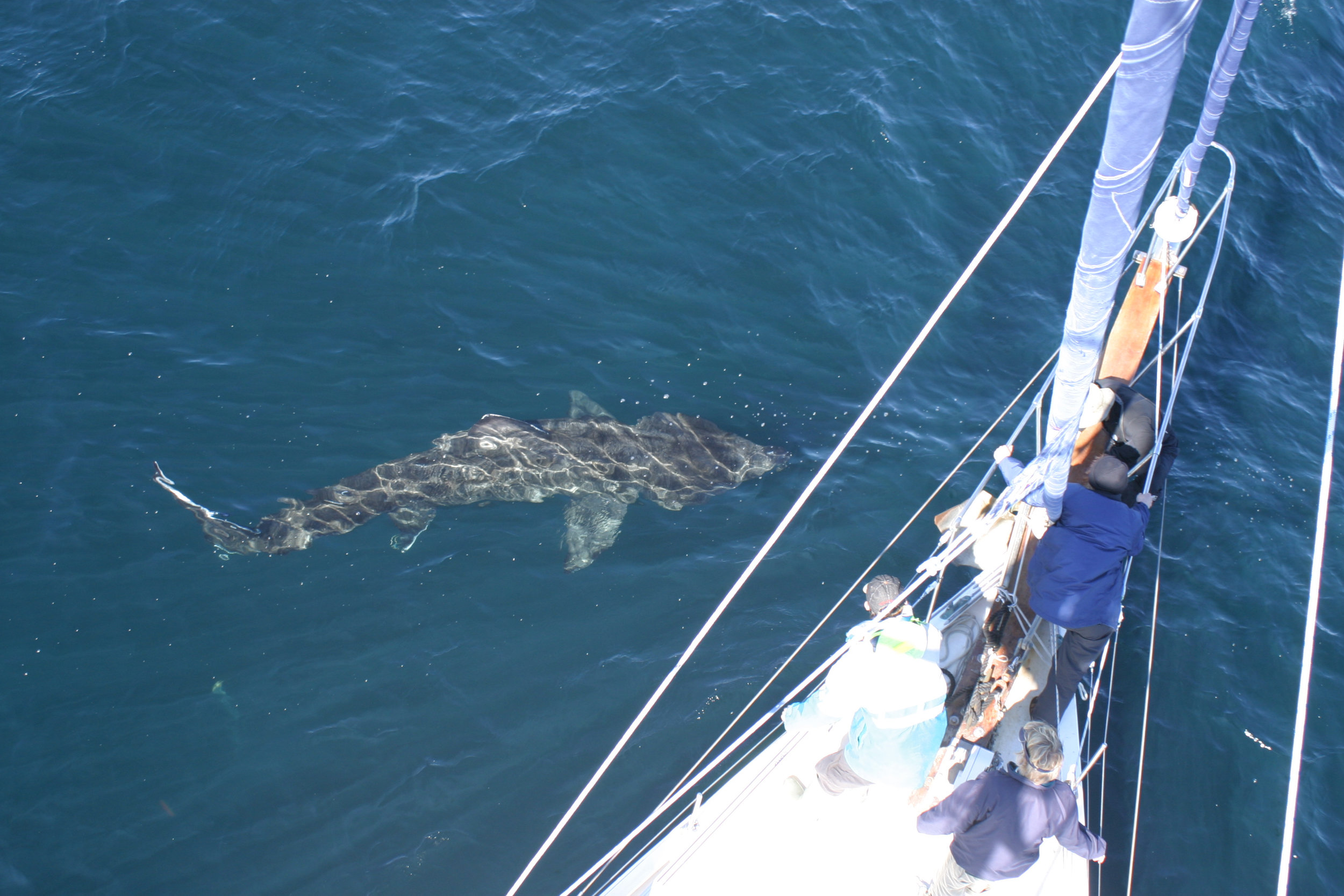 A close encounter with a basking shark