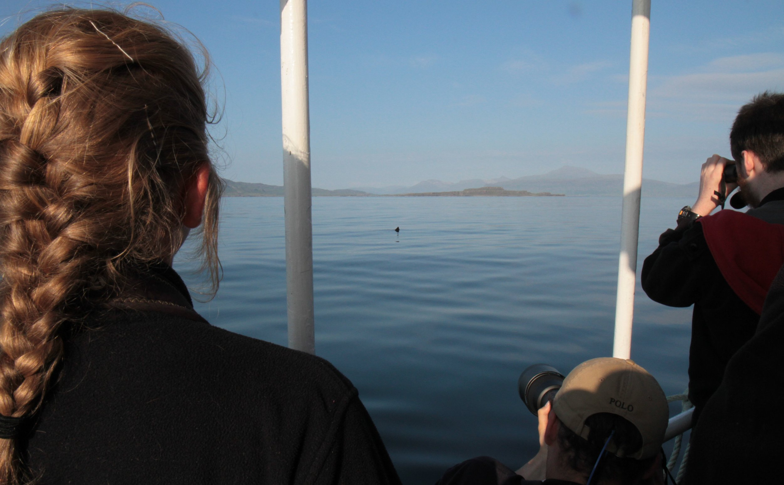 Our first sighting of the day, the destinctive fin of a basking shark lurking beneath the surface