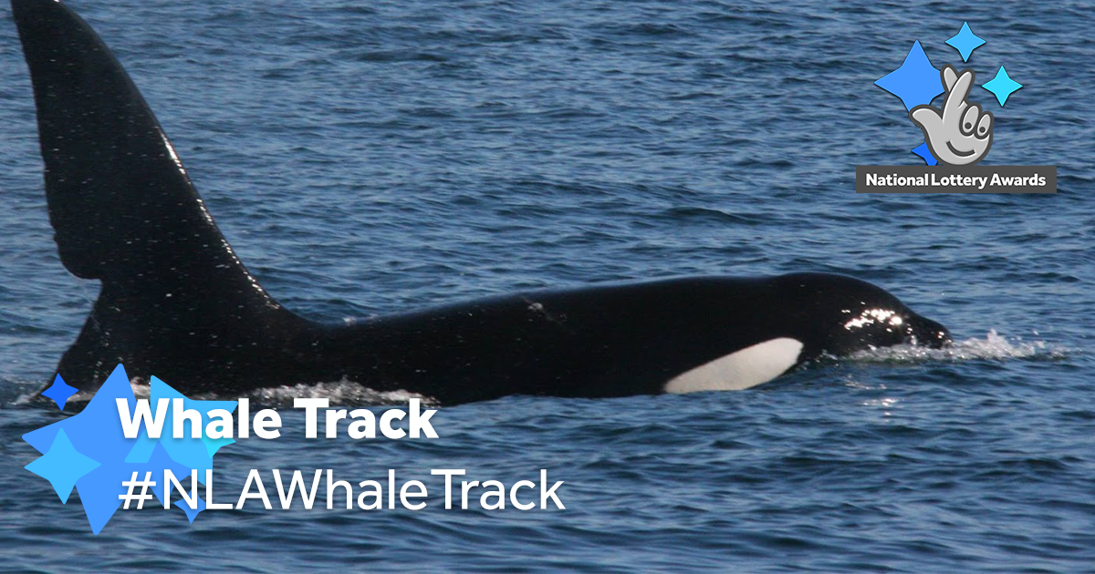 Whale TrackFACEBOOK.png