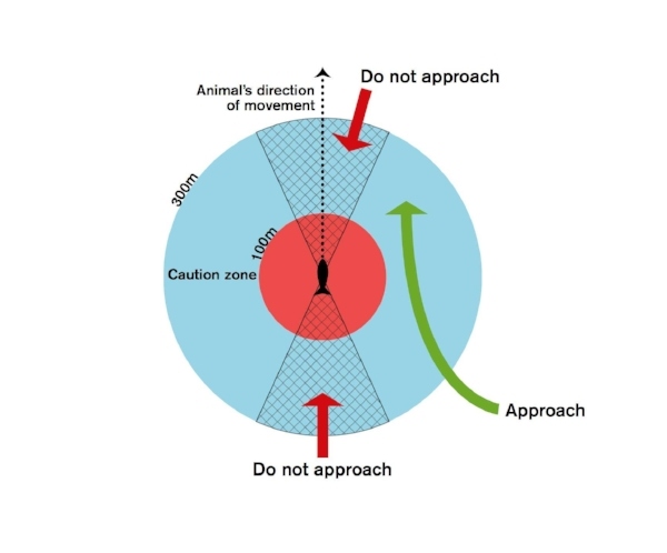 diagram_orca_approach.jpg