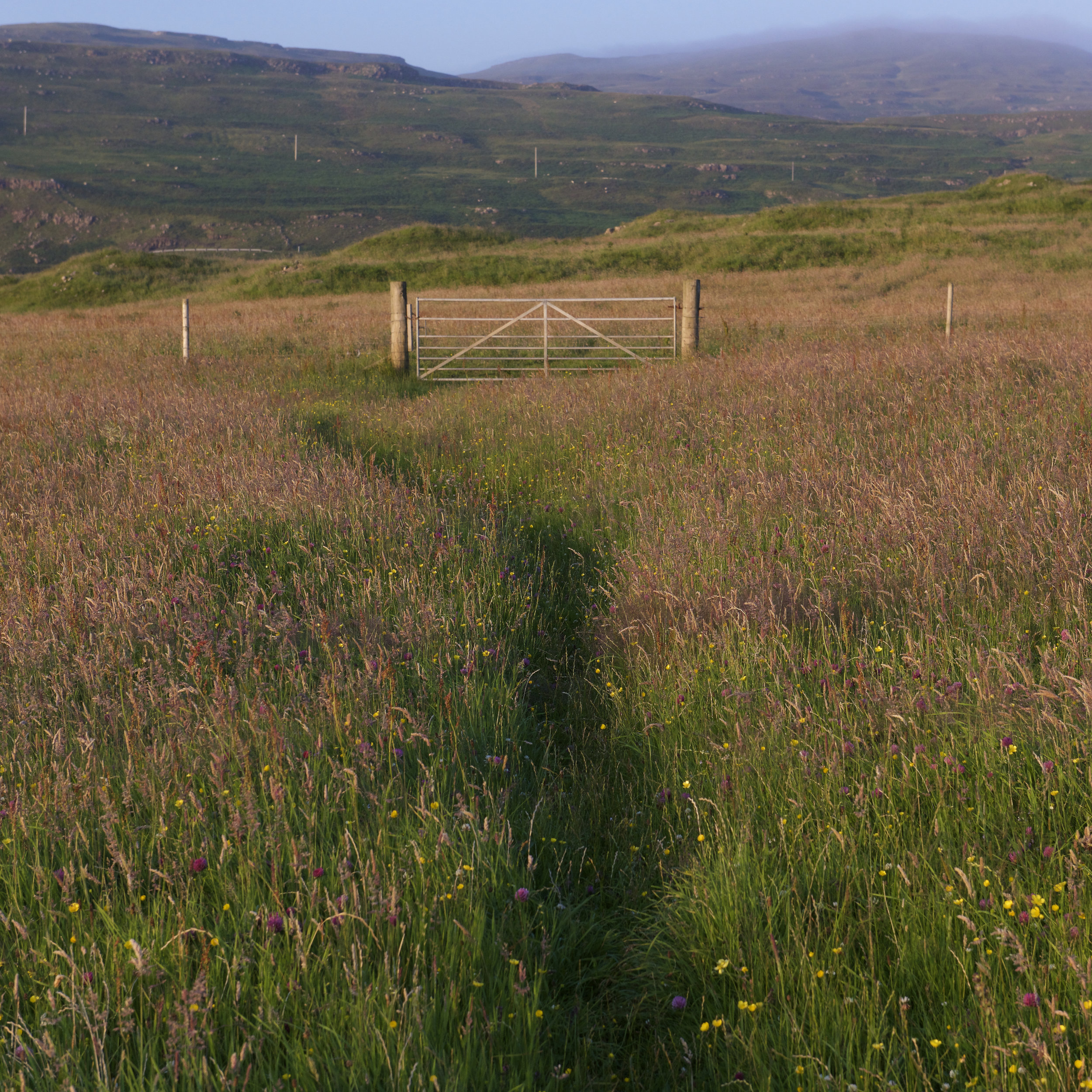 Treshnish meadow.jpg
