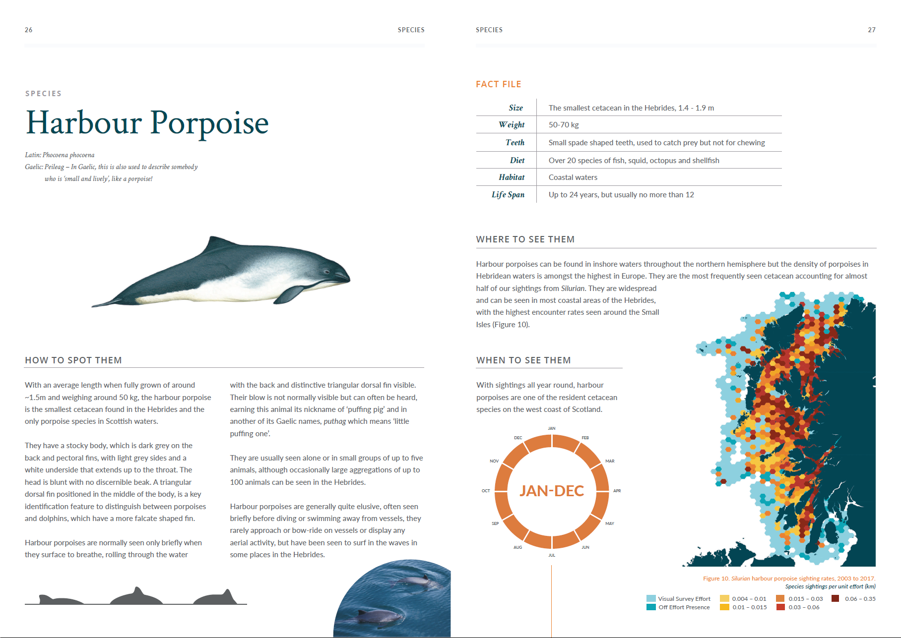 Atlas - harbour porpoise.png