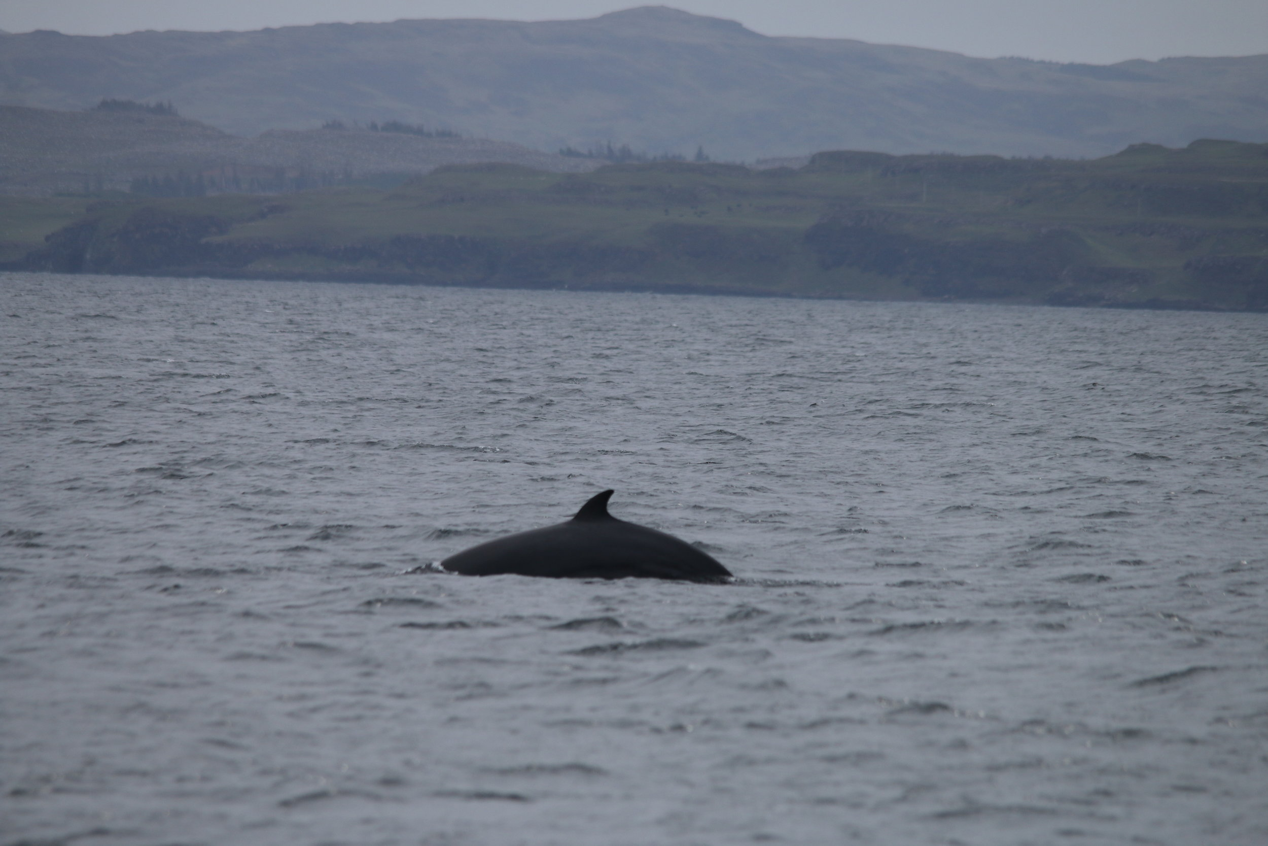 One of eight minke whales spotted on the last day!