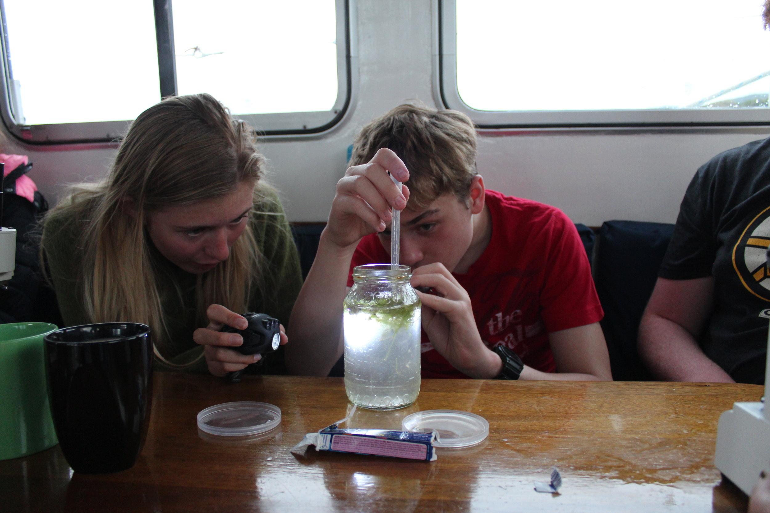 Plankton Party