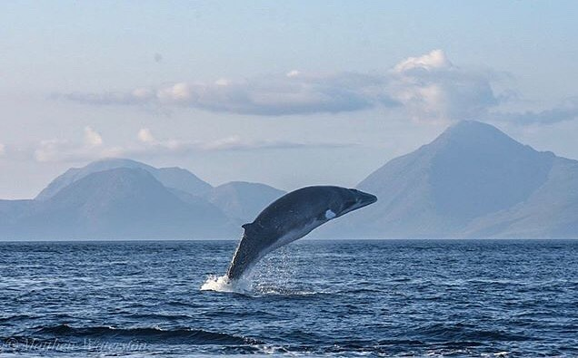 It's Friday and this amazing capture from @mattwaterston should put a smile on your face; a minke whale breaching against the dramatic Cuillins of Skye. - - Let us know what you see if you're out and about along the west coast this weekend, and don't forget to tag  @hebrideanwhaletrail - - - - - - - #hebrideanwhaletrail #hwdt #wildlifewatching #whalewatching #scotlandhighlands #scotlandisnow #guardiantravelsnaps #bbcscotlandpics #natureblogger #scotland_ig #hiddenscotland #wildscotland #thisisscotland #visitscotland #lonelyplanet  #getoutside #mylpguide #coastmagazine #scotsmagazine #calmac