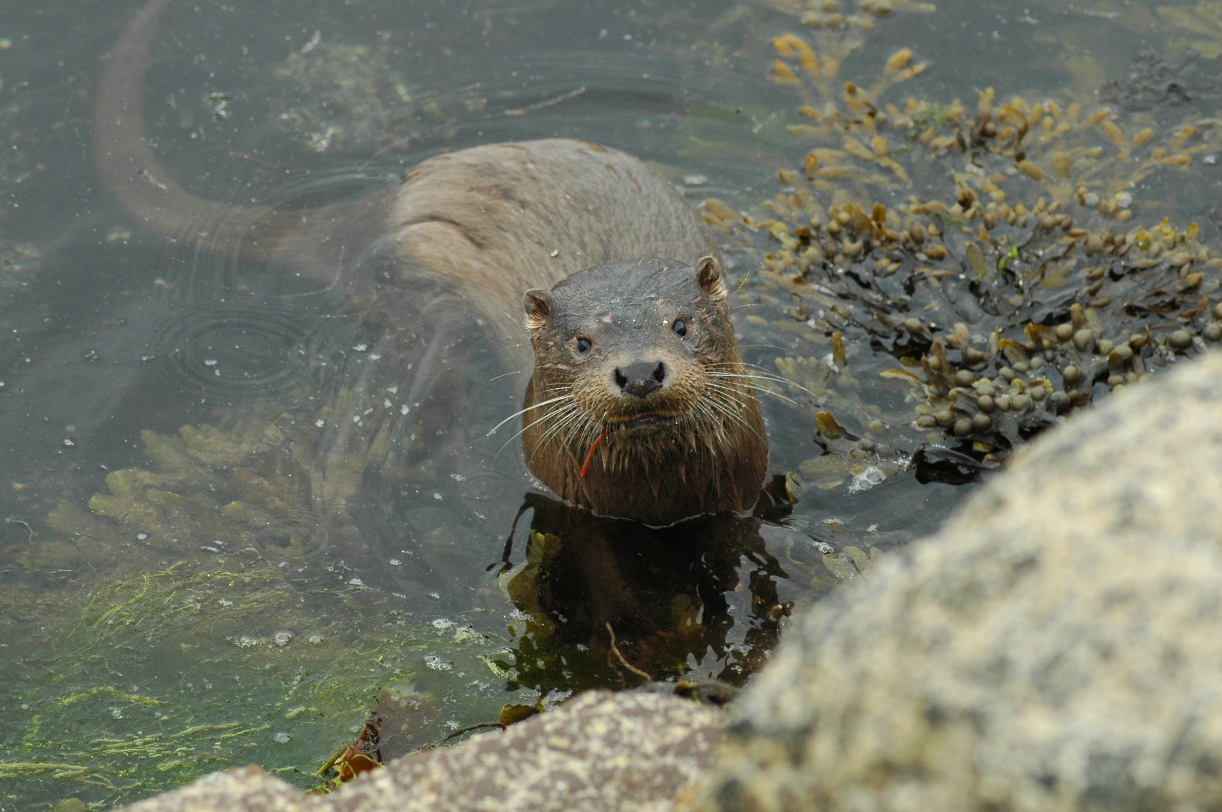 Otter. © Jenny Stark