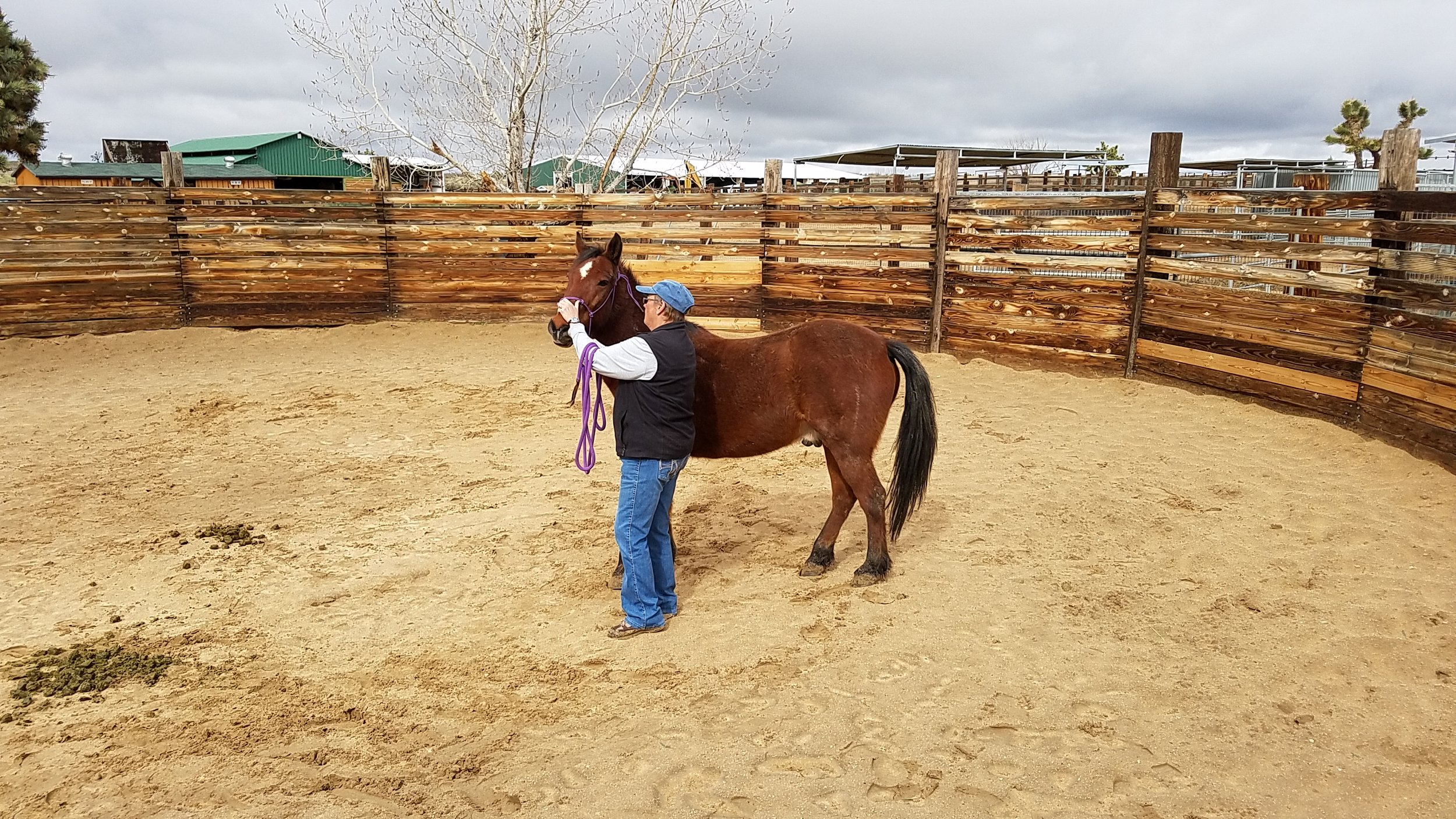 Terry working with one of the horses at Lifesavers Wild Horse Rescue