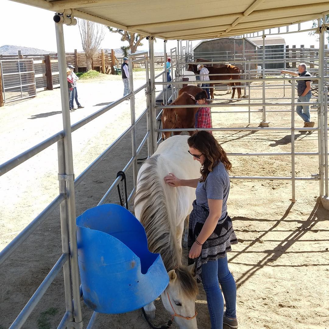 The clinic participants trying out these new skills on some of the rescued horses at Lifesavers