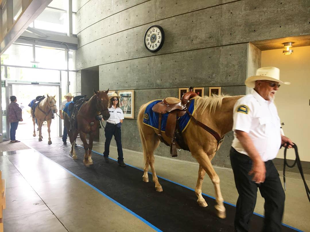 Our horses and LA Posse volunteers in the Long Beach VA