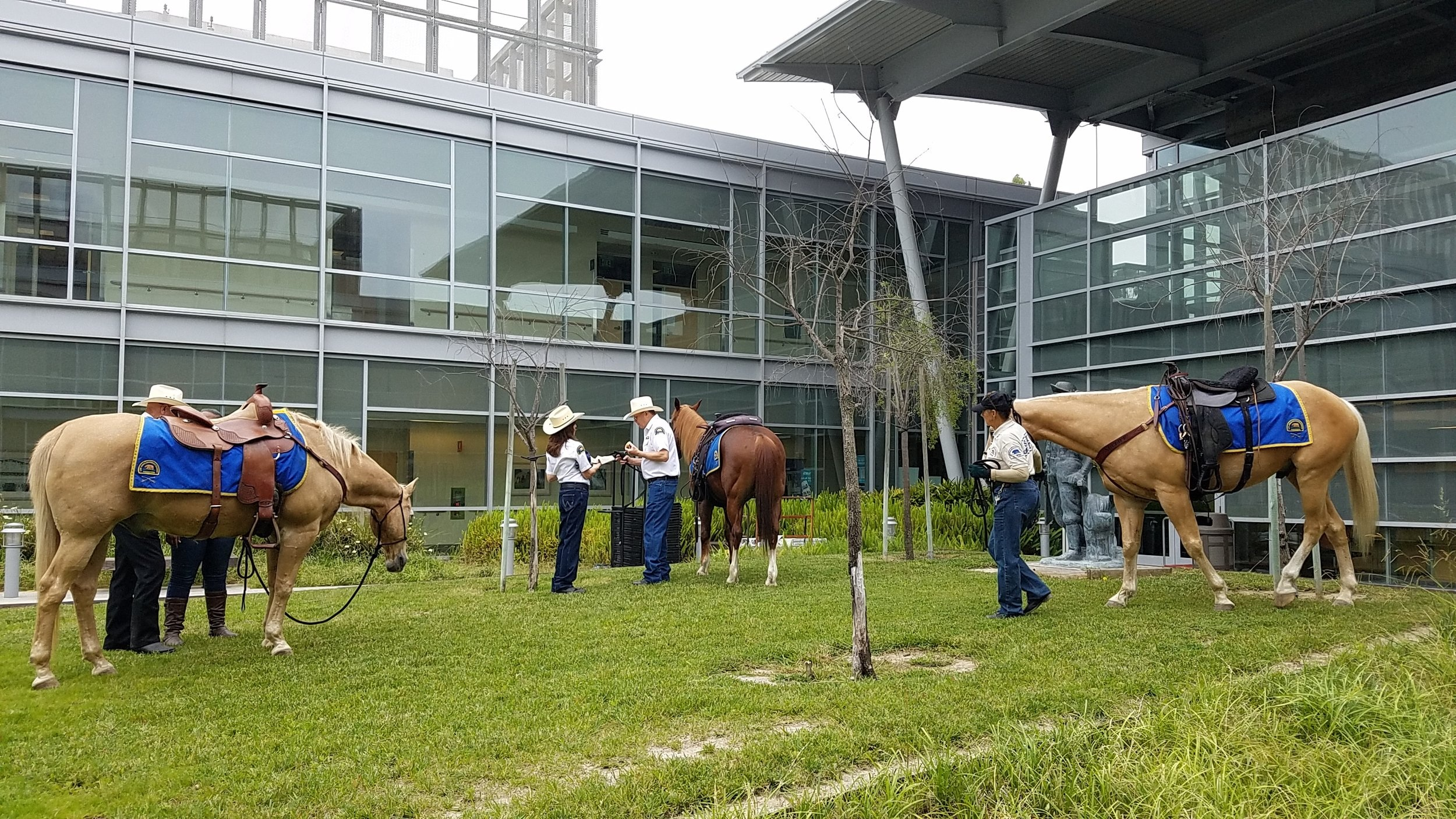 Posse volunteers and their horses, plus our EET training horse Rags in the inner courtyard of the LB VA.