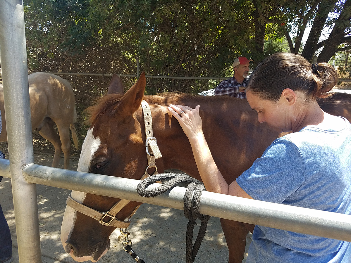 Katty is learning beginning Masterson Method techniques of relieving tension and pain in a horse through gentle touch.