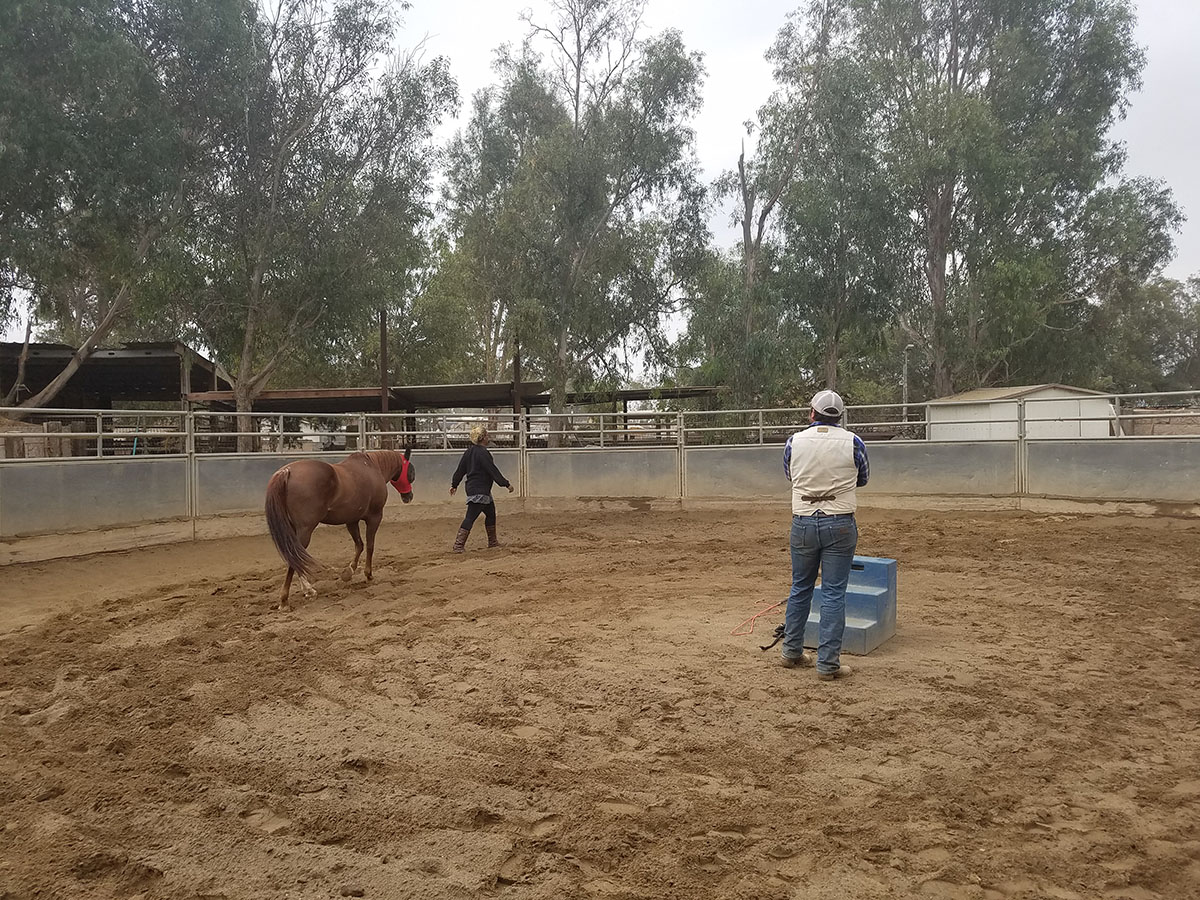 LaNita has learned to lead a horse without a halter or lead rope- but just with cues alone.