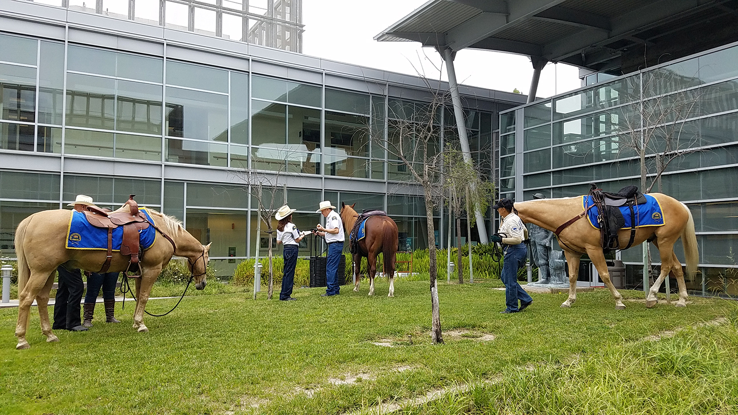 """To add to the honor of being able to participate in the """"Women's Wellness"""" event, the Los Angeles County Sheriff's Mounted Posse provided us with additional horses and volunteers."""