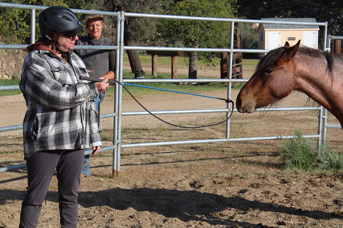 Cari is showing a wild rescued mustang a carrot stick for the first time, allowing the horse to get comfortable with it so they can use it together in training.