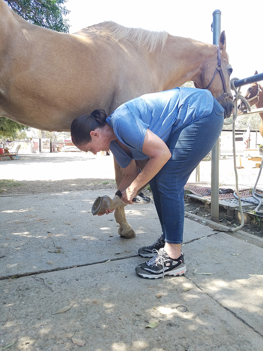 Picking up the hoof of a 1,000lb animal you don't know can be a very scary thing- but after a couple of deep breaths Katty dove in and did it… and took a big step towards trusting that she can do more than she thinks she can.