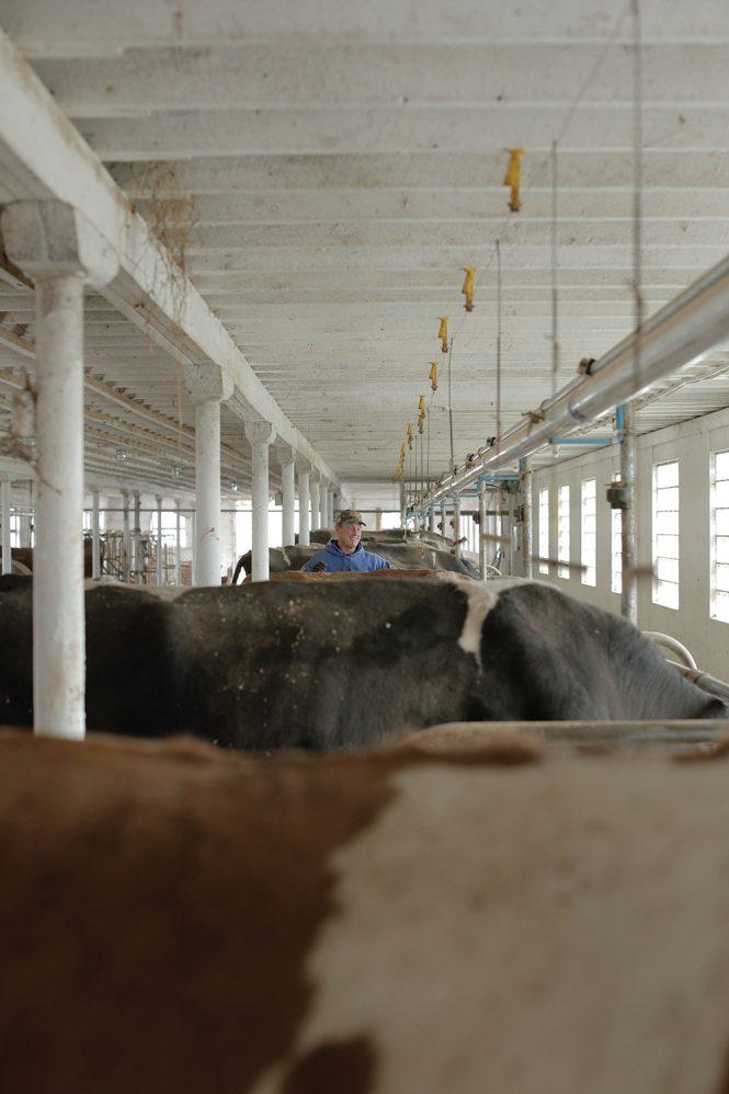 brookby-farm-raw-milk-dairy-5-665x998.jpg