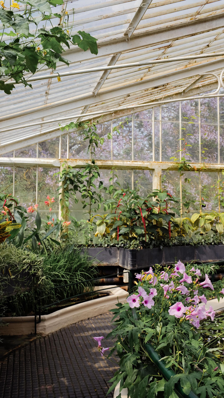Kew_Gardens_17.jpg
